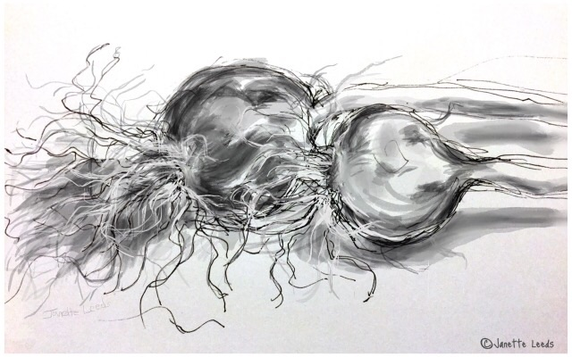 Garlic bulb drawing