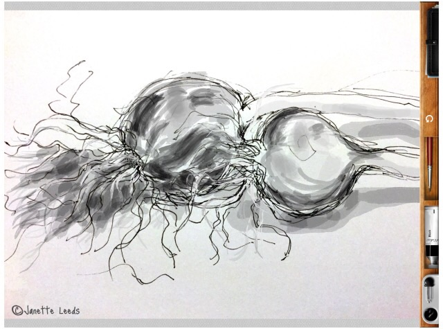Garlic bulb drawing 2