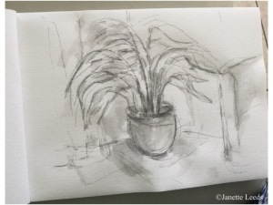 Photo of fern drawing