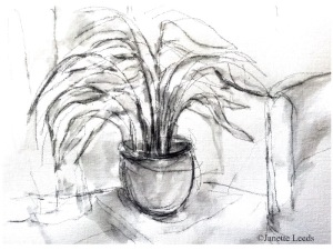Drawing of a fern