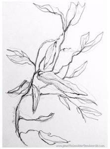 Drawing of gumleaves