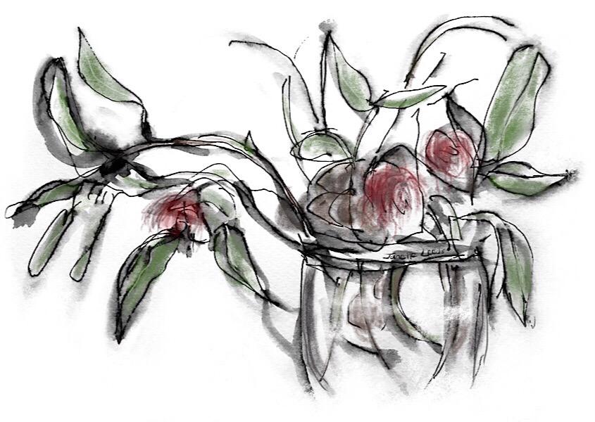 "Gumleaves ""Hakea"" in a vase"