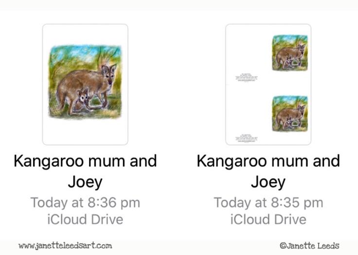 Kangaroo mum and Joey