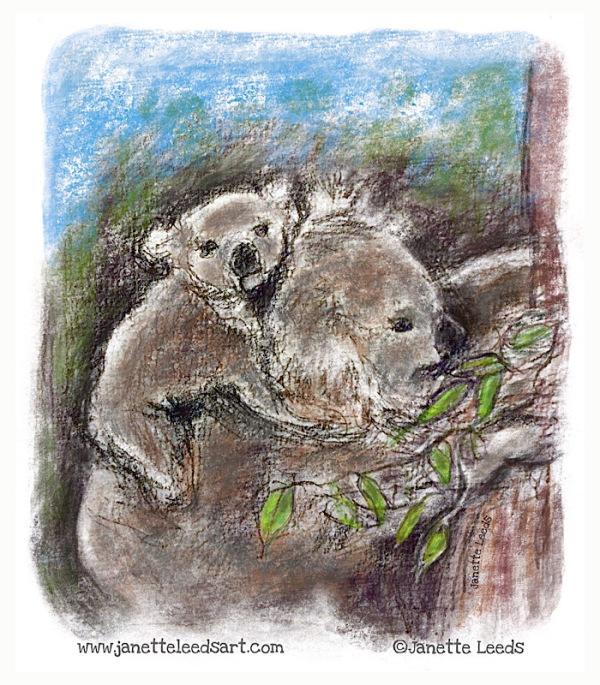 Koala mum and baby